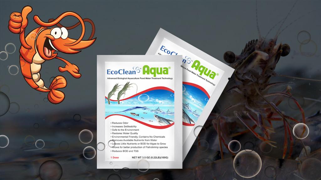vi sinh xử lý nước ao nuôi tôm cá ecoclean aqua