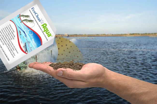 chế phẩm vi sinh xử lý nước ao nuôi tôm ecoclean aqua