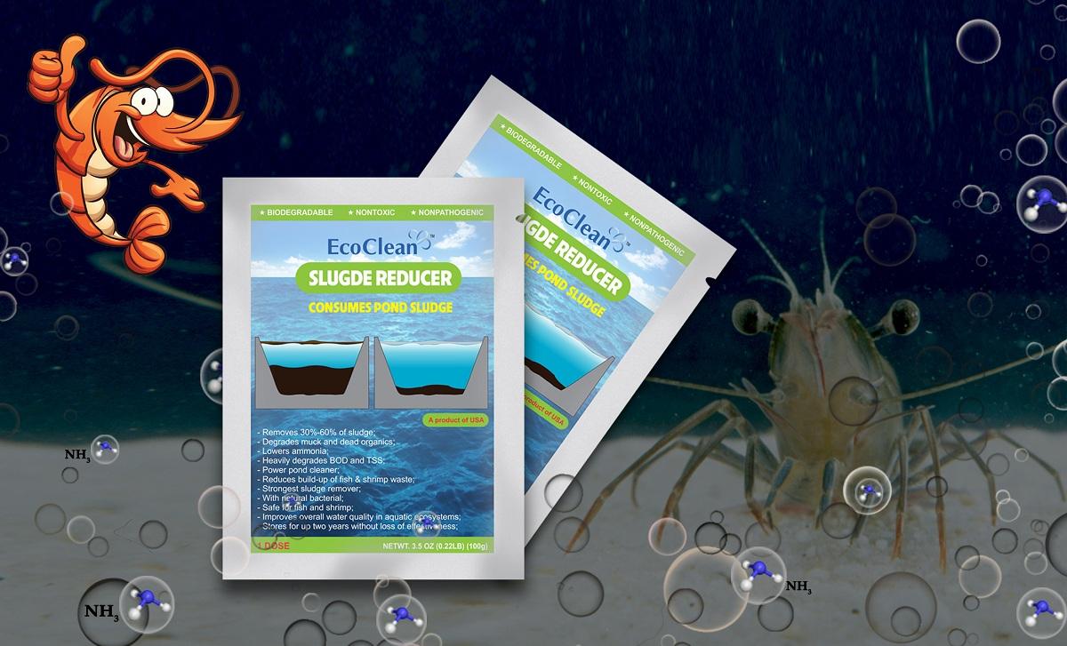 vi sinh xử lý bùn đáy ao nuôi tôm ecoclean sludge reducer