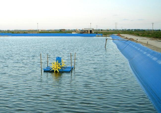 Lợi ích và những lưu ý khi sử dụng chế phẩm vi sinh trong nuôi trồng thủy sản