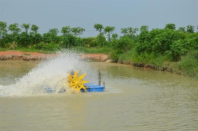 Những biện pháp phòng chống nóng khẩn cấp cho thủy sản trong mùa nắng