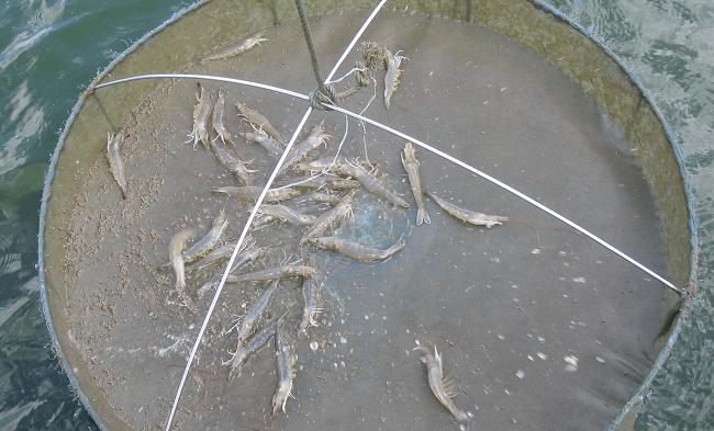 Những loại thức ăn dùng trong nuôi trồng thủy sản
