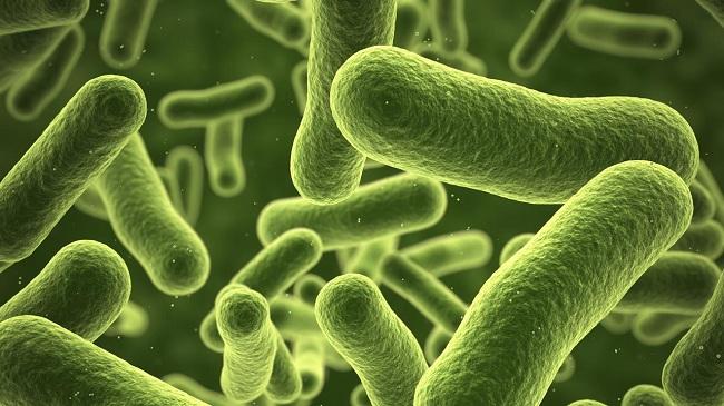 Chia sẻ một số kinh nghiệm sử dụng chế phẩm sinh học trong nuôi tôm đạt hiệu quả cao