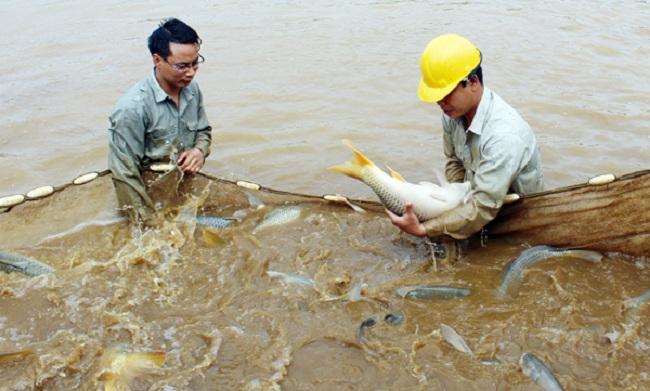 Kỹ thuật nuôi cá trong ao nước tù đạt hiệu quả cao