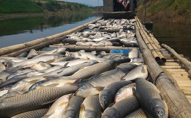 Một số biện pháp phòng và trị bệnh cho cá nuôi lồng bè